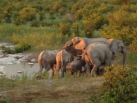 aventyrsresor-elefanter