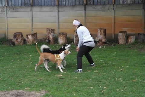 hund&katt sydafrika2