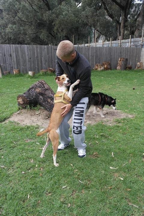 hund&katt sydafrika3